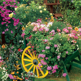 BLOOMING CART